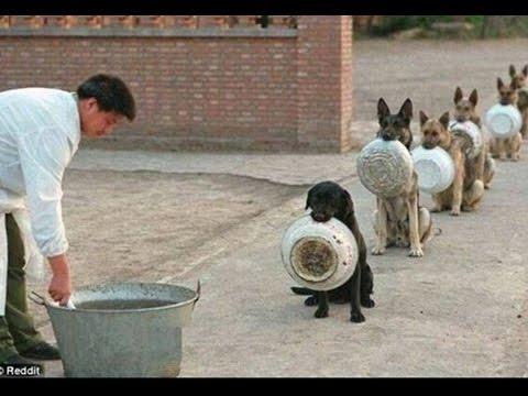 Ver vídeo - Os cães mais disciplinados!